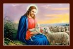 Chúa chăn cừu -C17